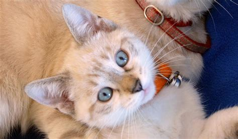 8 Health Problems That Cats Can Get by Delayed Weaning Reduces Behavioural Problems In Cats