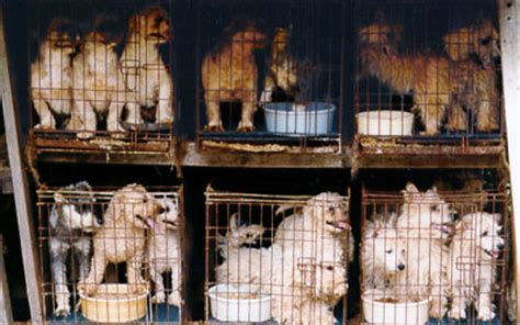 california puppy mill ca gov schwarzenegger vetoes anti puppy mill bill animal coalition