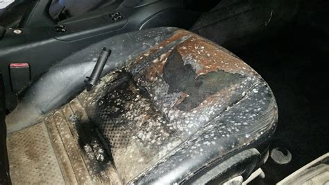 Mould On Car Upholstery by Car Damaged Badly During Shipping Company Refusing