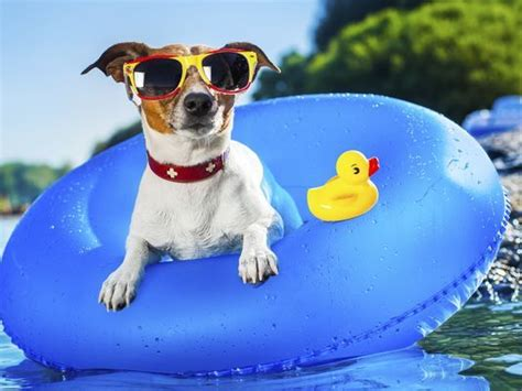 From The Adoptable Pets Photo Pool You Are A by Labor Day Pet Safety Tips Central Oklahoma Humane Society