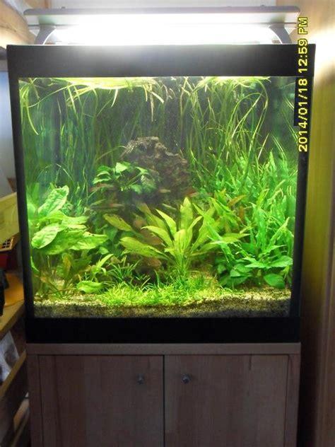 schrank 60x60x60 hochwertiges aquarium komplettset 60x60x60 216 liter