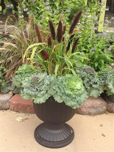 ornamental cabbage pictures 98 best ornamental cabbage planter images on pinterest