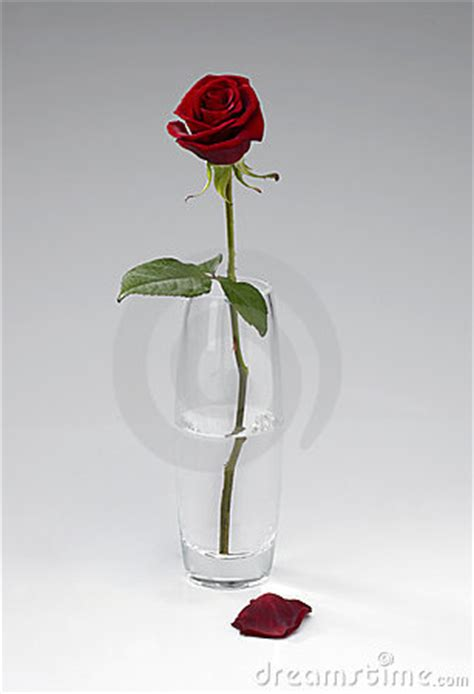 Single In Vase by Single In Vase Royalty Free Stock Images Image
