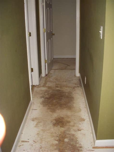 urine soaked into hardwood floor best way to remove urine odor diy forums
