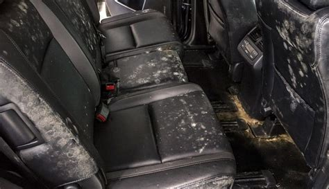 how to get rid of mold in house how to get rid of mold in car all you need to