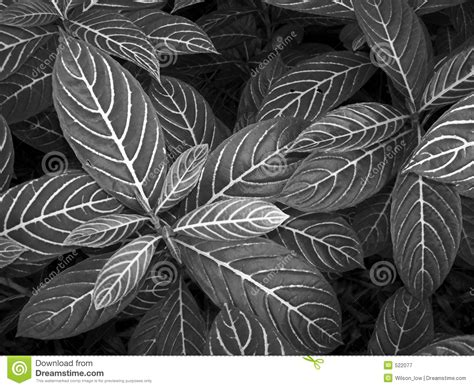 nature pattern black and white nature patterns in b w royalty free stock photography