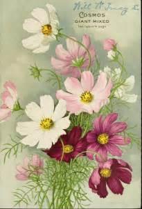 mami made it october birth flower blume des 8 best pflanzen und pflanzideen images on