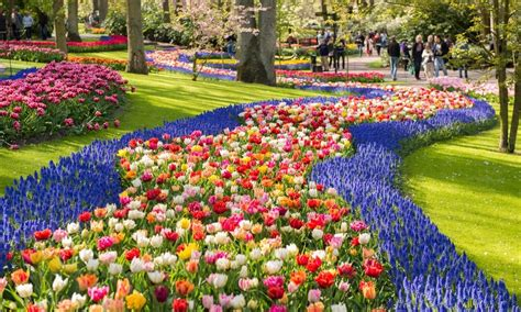 Keukenhof Gardens by Springe Guide Tulips In The Netherlands Tours4fun