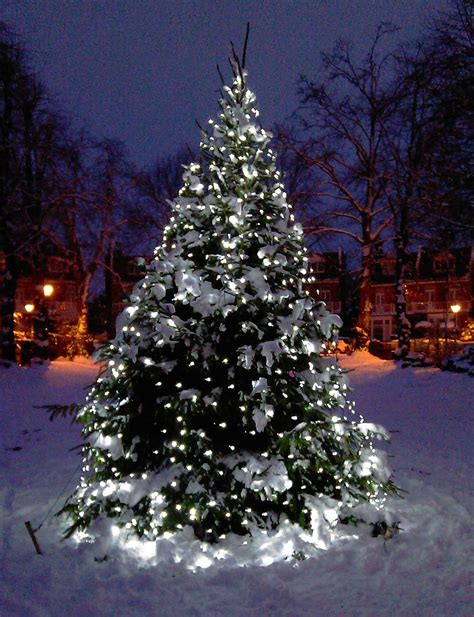 white led tree lights tree light ideas light ideas