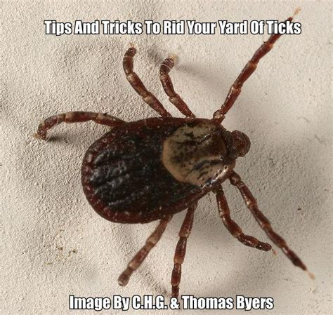 how to get rid of ticks in your yard and keep them away