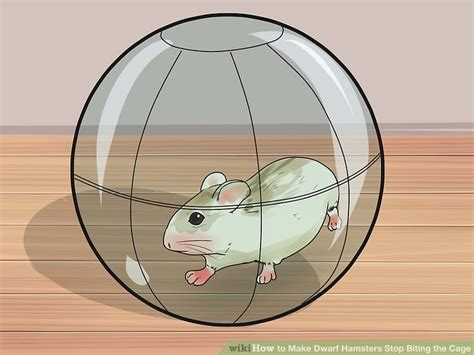 how to make a stop biting 3 ways to make hamsters stop biting the cage wikihow autos post