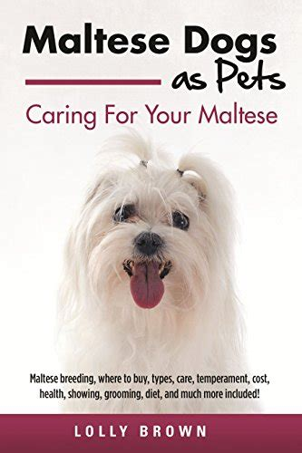 maltese puppy cost maltese dogs as pets maltese where to buy types care temperament cost