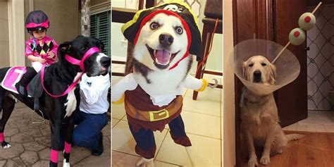 Best Costumes This Year by Best Pet Costumes 2015 Askmen