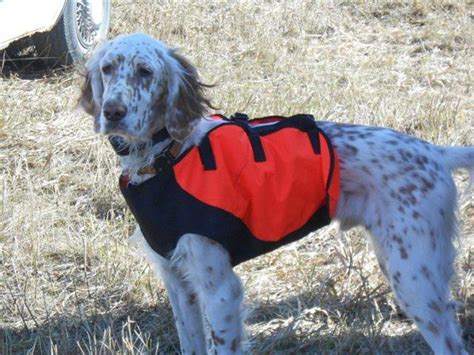 english setter dogs for sale in iowa round river setters hunting dog breeders