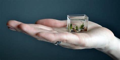 Alat Pembersih Akuarium kisnik unik pria siberia ciptakan akuarium terkecil untuk bayi ikan