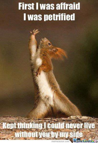 Dramatic Squirrel Meme - emotional memes image memes at relatably com