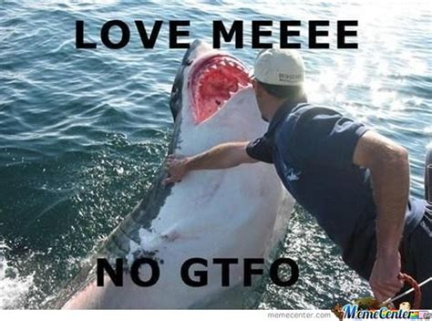 Shark Attack Meme - sharks memes best collection of funny sharks pictures