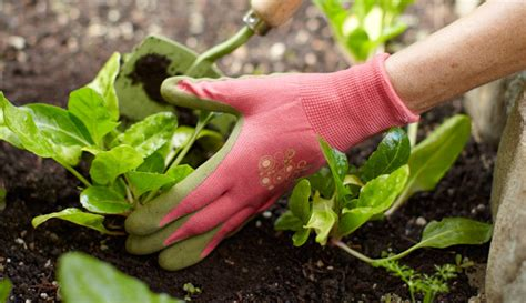 gardening services london cleaning system london