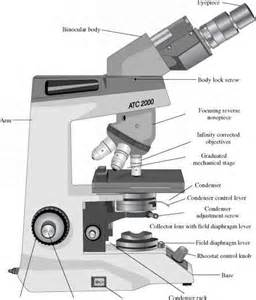 key components of the compound microscope nuclear matrix