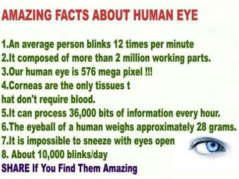 17 best images about facts about your on