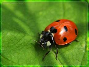 picture of insects insects family information for children sports cs