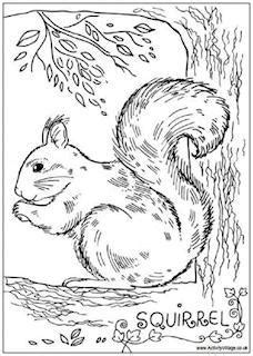 red squirrel coloring page squirrels