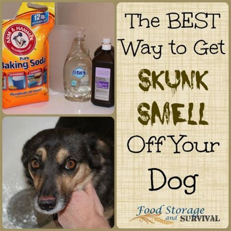 Best Way To Get Cat Urine Out Of by Best Way To Get Pet Smell Out Of Carpet 28 Images 50