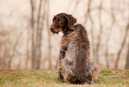 types of seizures in dogs photo scanner canine epilepsy