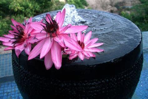 nomi derivano da fiore il fiore di loto una pianta acquatica resistente e a
