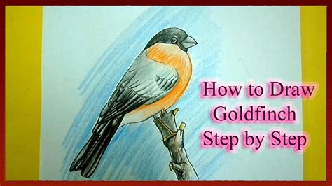 how to draw a goldfinch how to draw goldfinch step by step