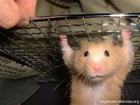 animali da gabbia animali quot esotici quot in gabbia aae non ci sta