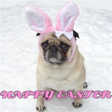 happy easter pug pug easter bunny happy easter puppies photo 33991892 fanpop