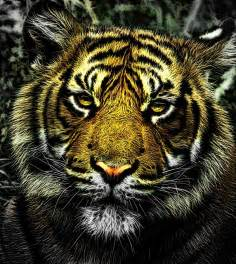 kepala harimau www pixshark images galleries with a bite