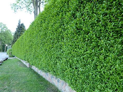 garten schlüter bodendecker und andere pflanzen garten schl 252 ter