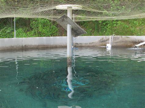 backyard fish farming trout trout farming at home 2017 2018 best cars reviews