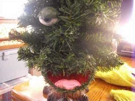 douglas fir singing tree singing tree douglas fir 4