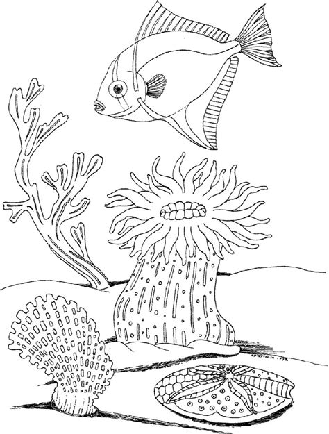 underwater coloring page marine life coloring pages az coloring pages
