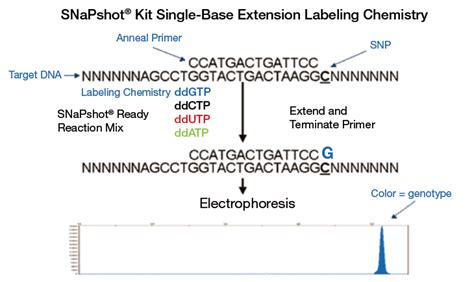 Gene Snp Detox Test by Trilink Mtdna Snp Assay Primers