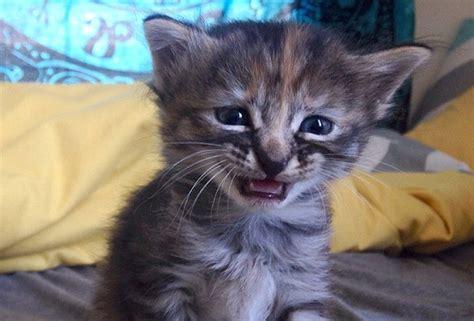 imagenes gatos tristes gato triste gatos tristes pinterest gatito triste
