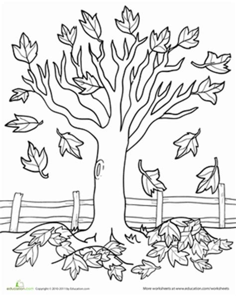 deciduous tree coloring page maple tree worksheet education com