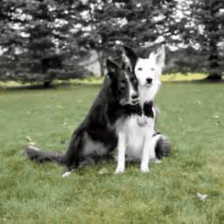 hugging dogs hug gif find on giphy