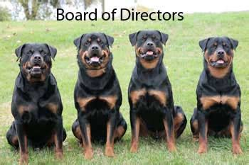 black jade rottweilers rottweilers breeds picture