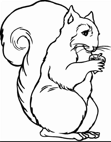 coloring book animals coloring pages