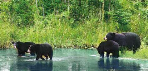lacs et glaciers des rocheuses trek randonn 233 e p 233 destre - 1325027995 Lacs Des Rocheuses Canadiennes
