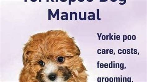 how much do yorkie poos cost yorkie poos the ultimate yorkie poo manual yorkiepoo care costs feeding