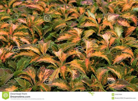 colorful ground cover colorful groundcovers pictures to pin on pinsdaddy