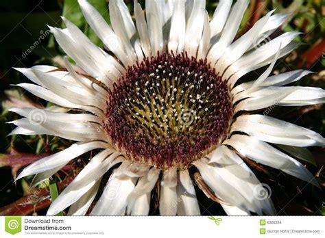 fiori rari fiori rari immagini stock immagine 6300334