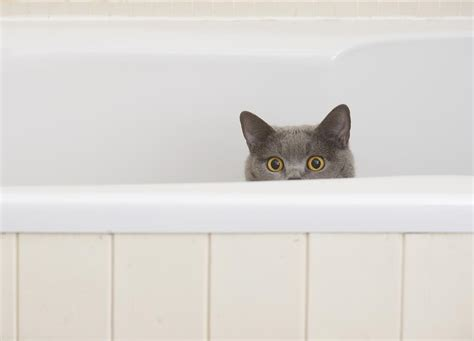 why do cats like bathtubs 10 common mistakes new cat owners make and how to avoid them