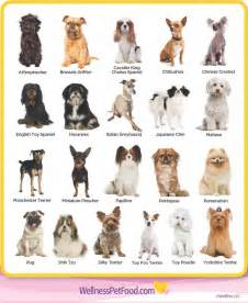 types of dogs small black dog breeds dog training home dog types