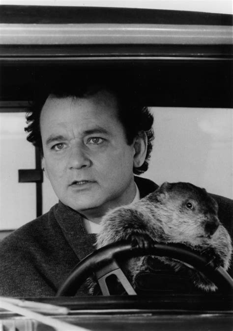 groundhog day with bill murray does your search feel like groundhog day